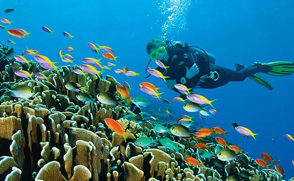 Дайвинг-на-Мальдивах-1.jpg